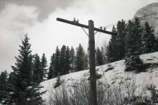 An old power pole beside the tracks on Hwy 1A, 35-SP, Fomapan 400, A76 1:1
