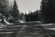 Highway 1A, which sometimes gets closed off for wildlife and pandemics, OM-2n, Fomapan 400, A76 1:1